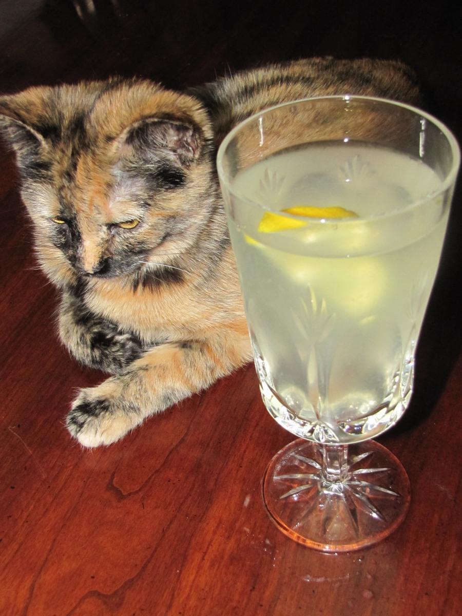 Vegan Recipe Cat Food