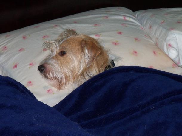 Scruffy Singh Brown Bedtime