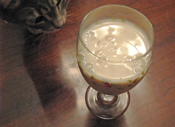Namkeen Lassi and Kitten