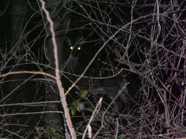 Charlotre Deer