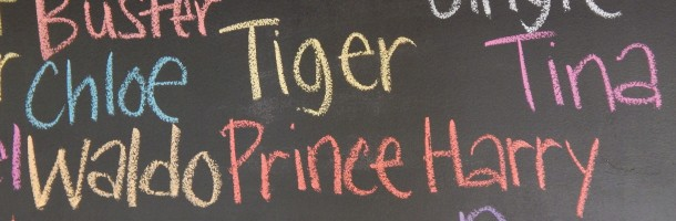 Tiger and Prince Harry's Name on Spay Neuter Charlotte Blackboard
