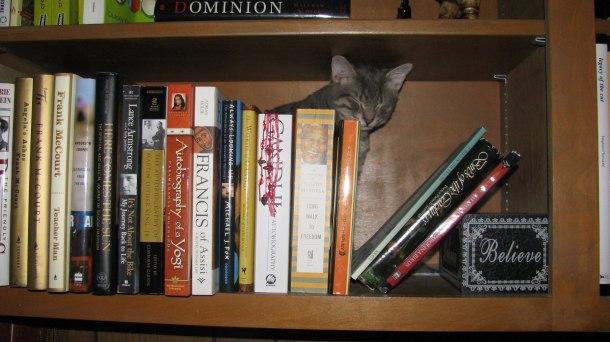tiger bookshelf