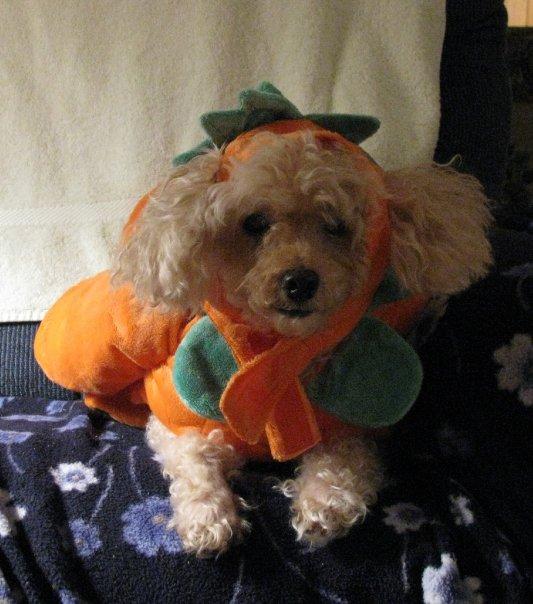 Muggsy Pumpkin