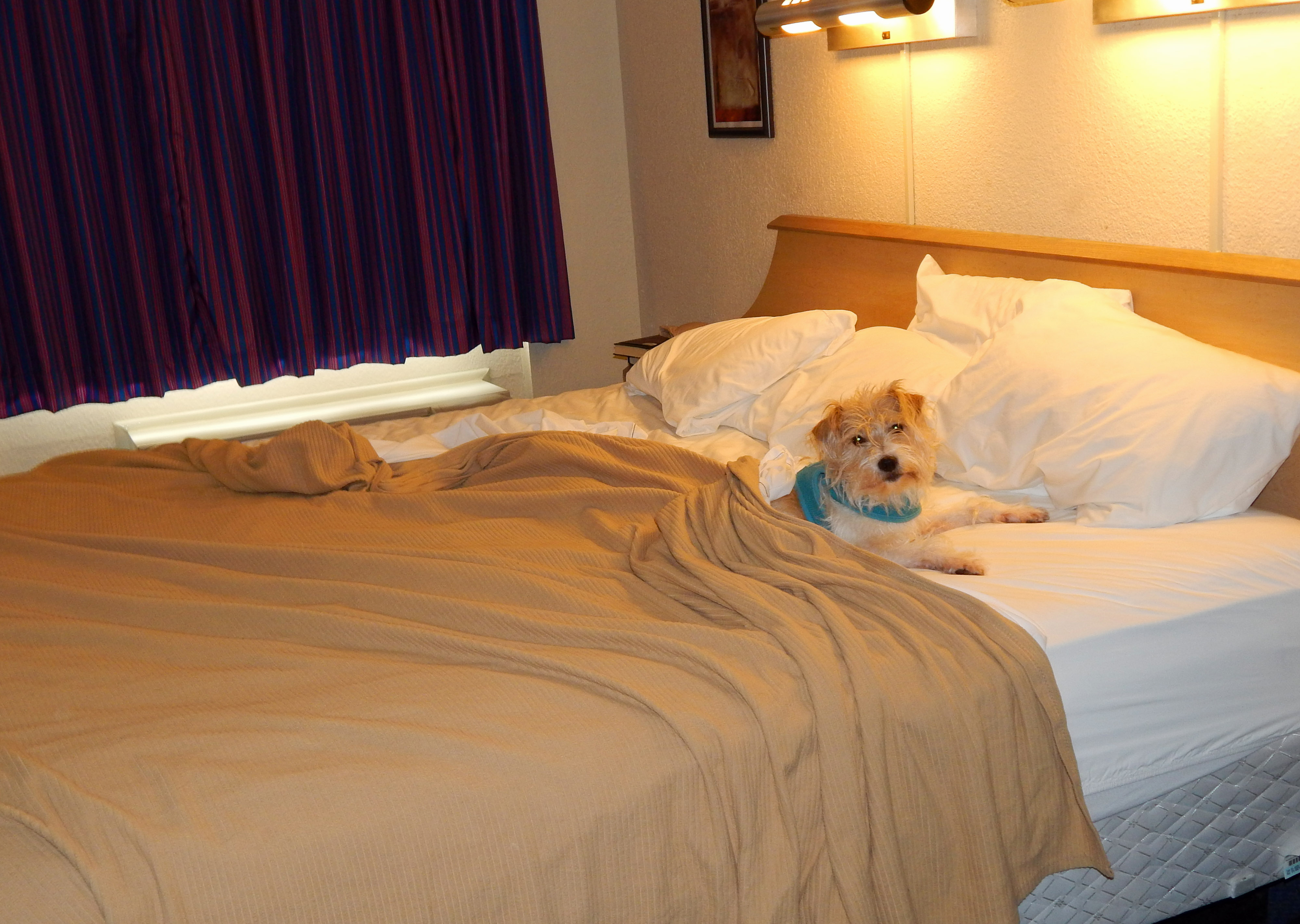 Scruffy At Red Roof Inn. Myrtle Beach ...