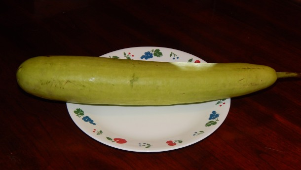 A bottle gourd (lauki) squash on a full-size dinner plate.