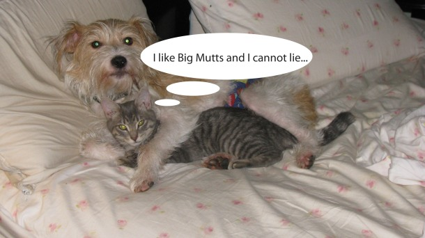 big mutts